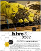 OC Weekly Feature: Hive & Seek • photography by Jennie Warren • design by Kelly Alexis Lewis